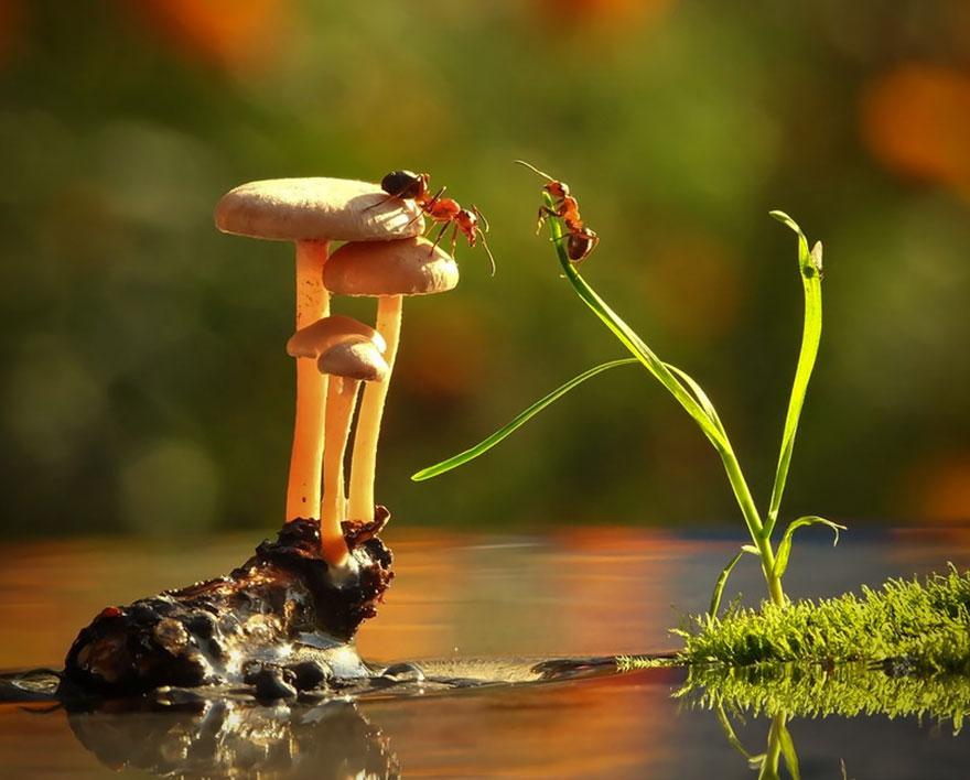 an-incredible-world-of-mushrooms-10