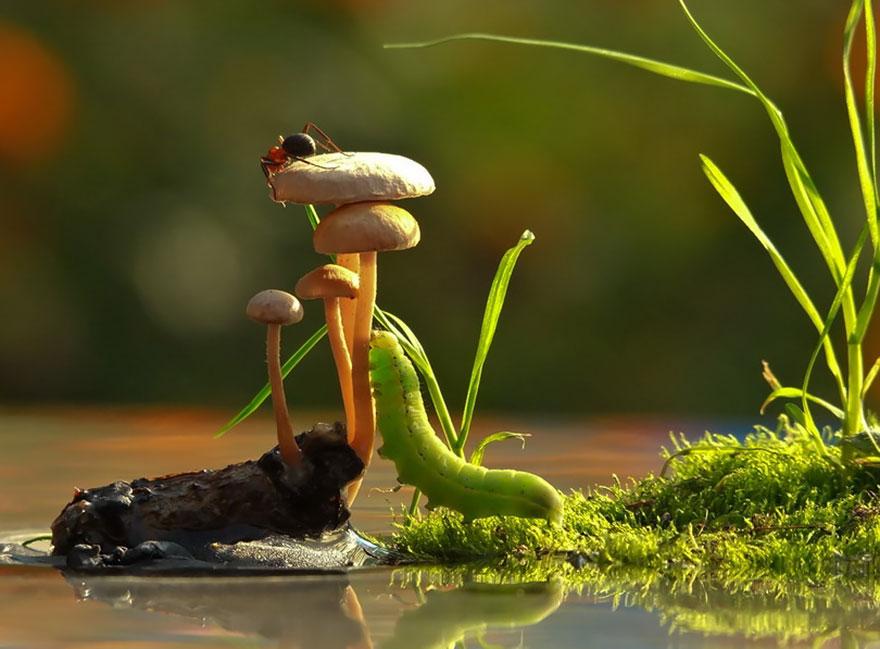an-incredible-world-of-mushrooms-11