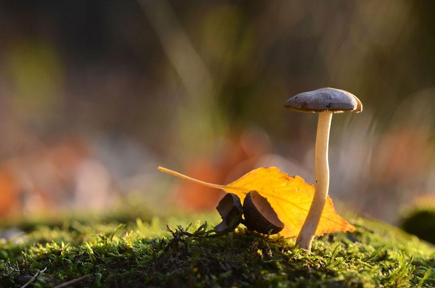 an-incredible-world-of-mushrooms-17