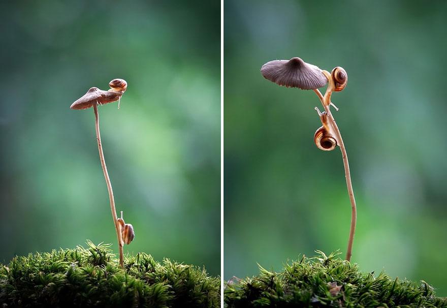 an-incredible-world-of-mushrooms-3