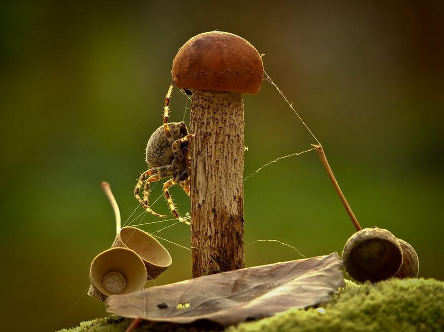 an-incredible-world-of-mushrooms-31