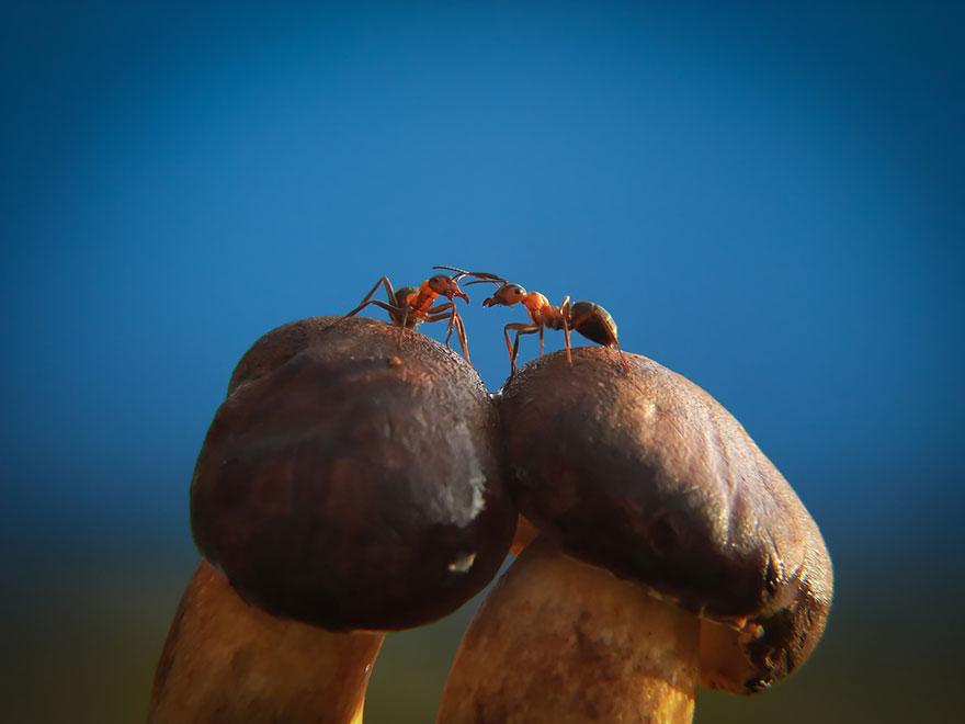 an-incredible-world-of-mushrooms-35