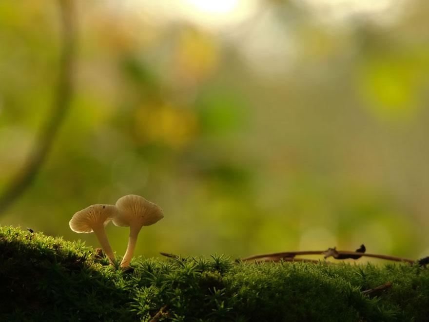 an-incredible-world-of-mushrooms-36