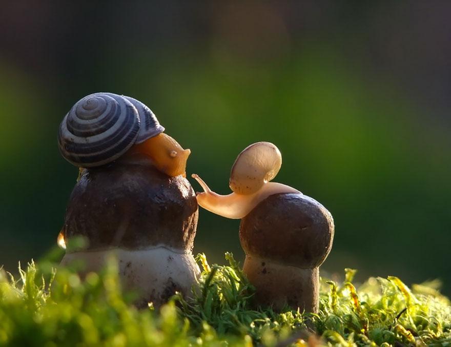 an-incredible-world-of-mushrooms-5