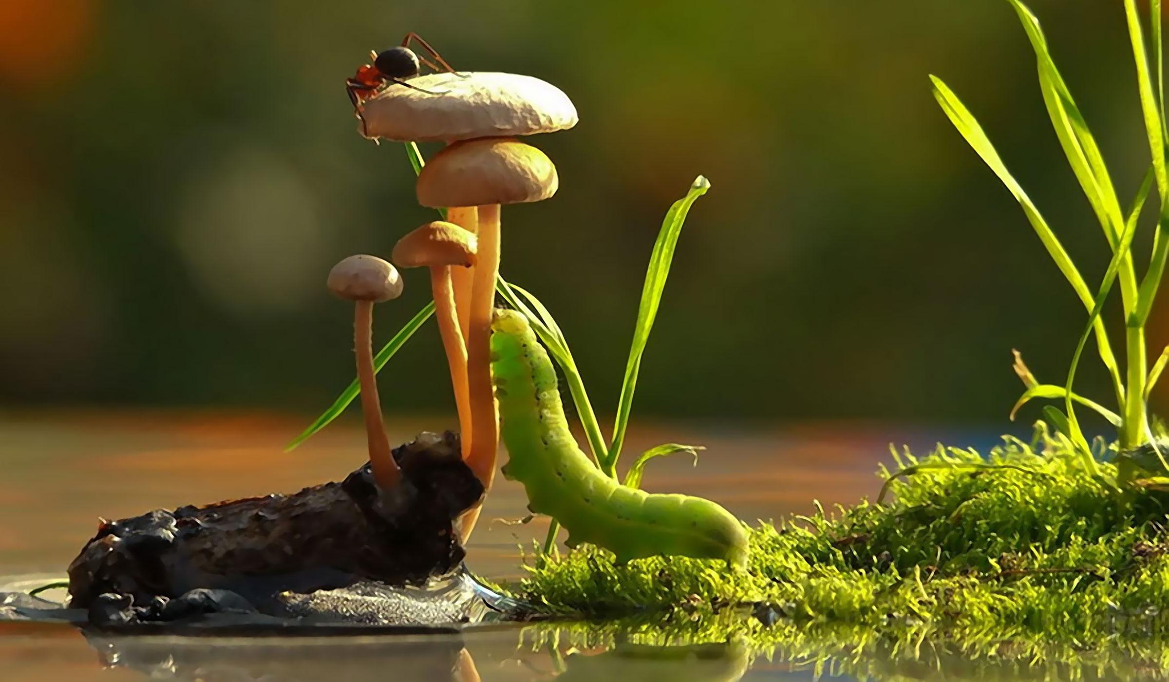 An Incredible World of Mushrooms