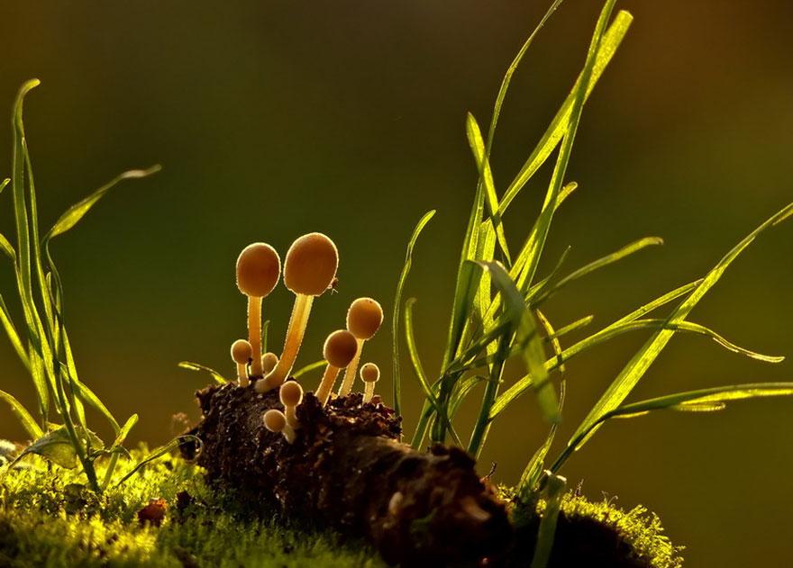 man-incredible-world-of-mushrooms-32