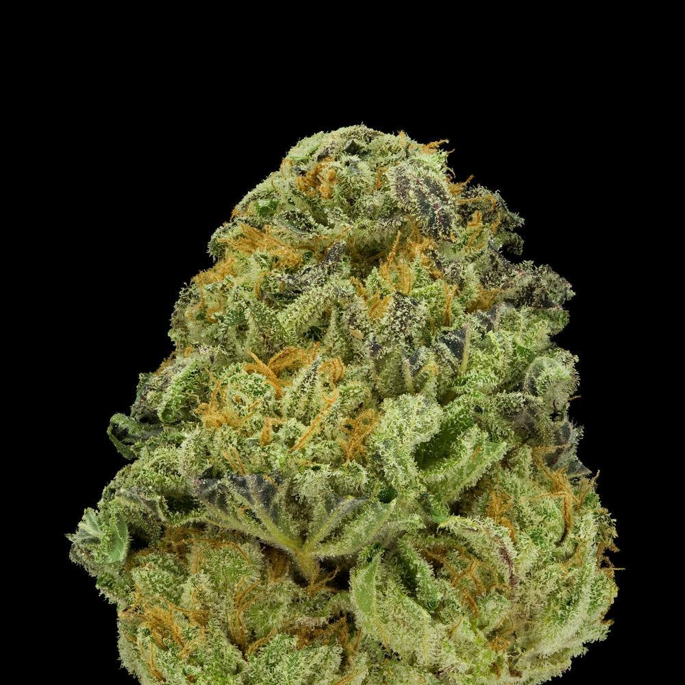 Green--A-Field-Guide-To-Marijuana-03