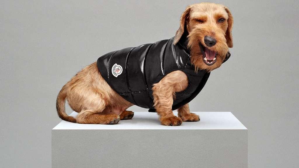 moncler coat dog